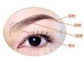 <b>眉毛种植术后效果能长久保持吗</b>
